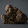 La truffe blanche d'Alba en exclusivité à la Maison de la Truffe