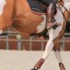 Equisense Motion S: le capteur connecté pour les sports équestres