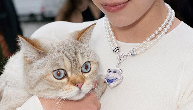 Boucheron Wladimir le chat
